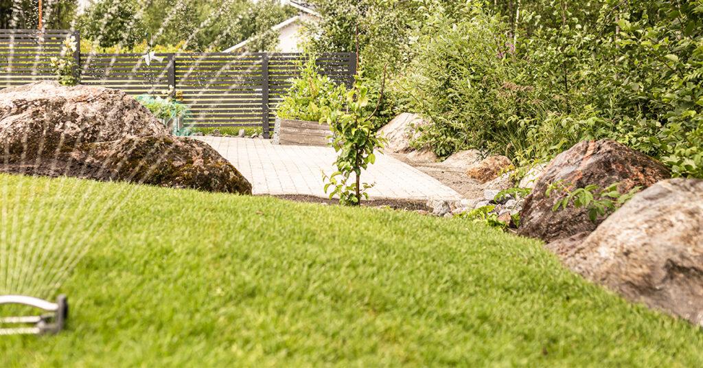 Puutarhaan asennettu siirtonurmi, jota kastellaan